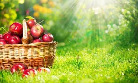 Változások a gyümölcsültetvények engedélyeztetésében