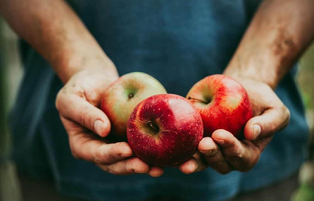 Gyümölcstermelők Éves Továbbképzése