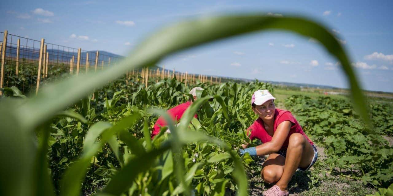 ÖMKi Talajtól a tányérig kampány – a csendes bioforradalom