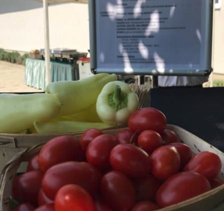 """Beszámoló a """"Szemléletváltás a zöldség- és gyümölcstermesztésben"""" szakmai napról"""
