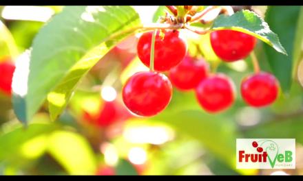 Zöldség-gyümölcs termesztés legszebb pillanatai