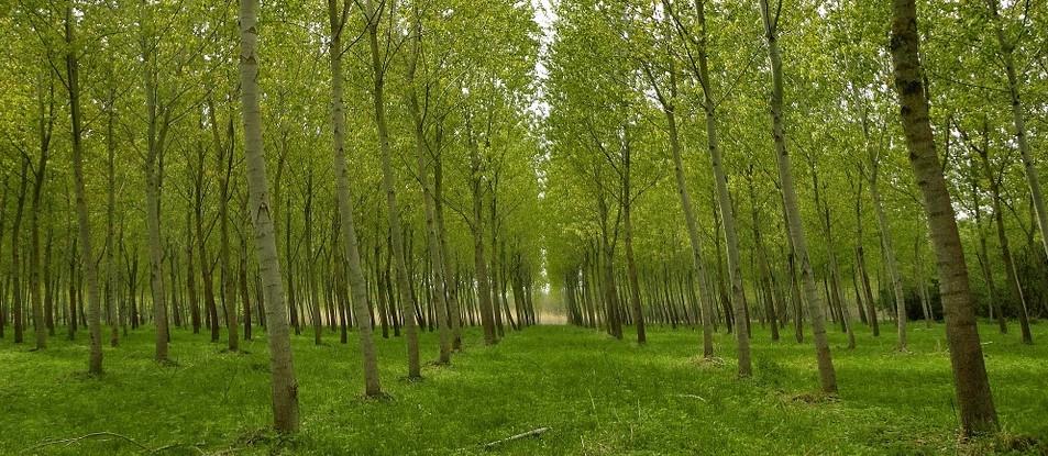 Az agrárminiszter bejelentette, a jövőben jelentős támogatás jut majd fásításra és erdőtelepítésre