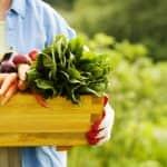 """Megjelent a """"Mezőgazdasági őstermelő adózása 2020"""" kiadvány"""