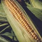 Megjelent a KSH kiadványa a főbb növénykultúrákról előzetes zöldség- és gyümölcstermesztési adatokkal