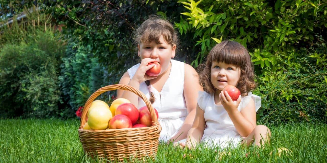 Profiktól Profiknak: Gyümölcstermesztési Szaktanácsadási Napok – Az ökológiai (bio) alma növényvédelme