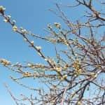 Az enyhe tél hatása a gyümölcstermesztésre, illetve az idei gyümölcstermésre