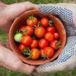 A kertészek így segítenek