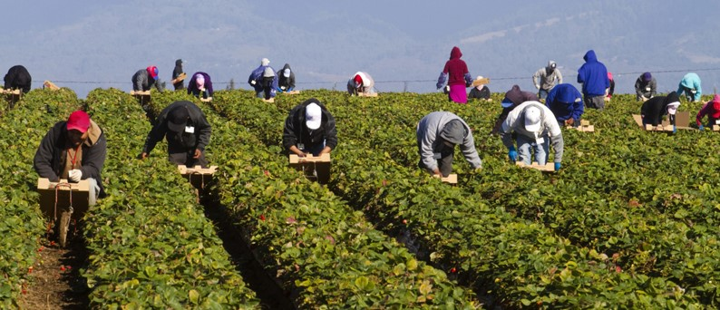 Azonnali intézkedések Spanyolországban a mezőgazdasági munkaerő biztosítása érdekében
