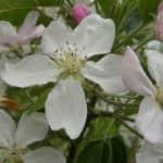 A tavaszi fagykárok felmérése – előzetes helyzetértékelés