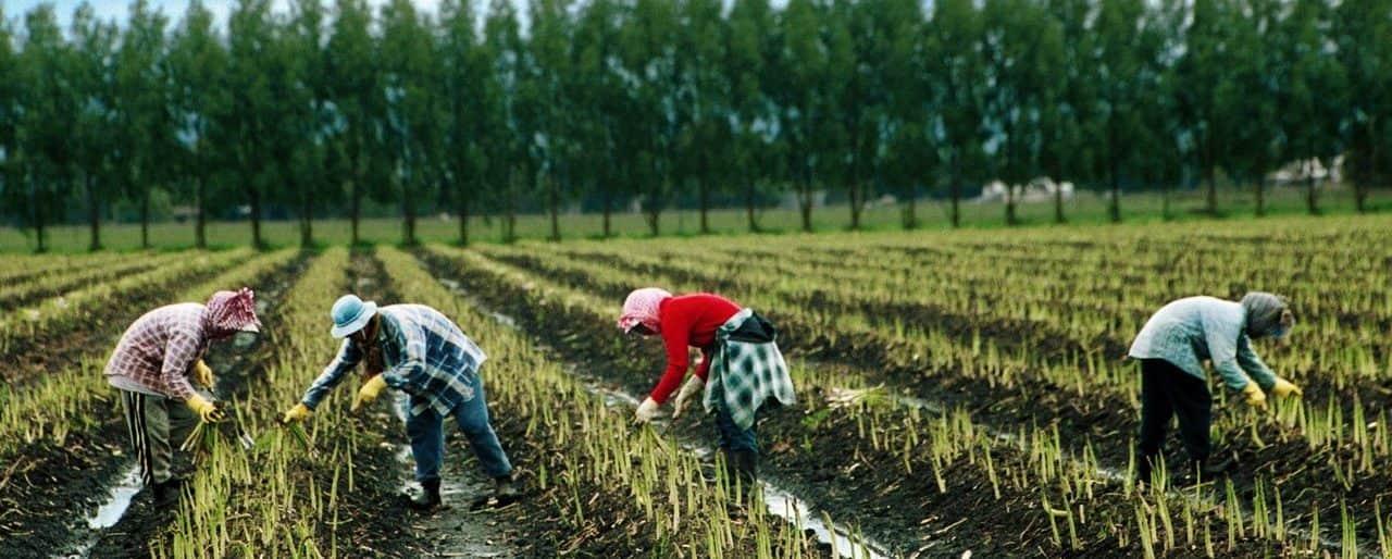 A mezőgazdasági idénymunkások Magyarországra történő belépésének szabályai