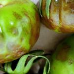 Andalúziában igényelhető támogatás a paradicsom barna termésráncosodás vírus (ToBRFV) okozta károk kompenzálására