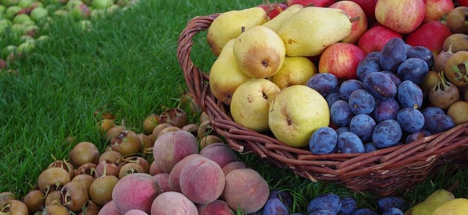 A FruitVeB és az ÉKASZ 2020. évi előzetes termésbecslése
