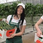 Az oroszországi zöldséghajtatás termelési eredményei