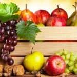 FruitVeB Bulletin 2019 – Gyümölcstermesztés I. rész