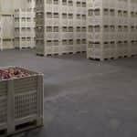 Lengyelországban pár héten belül kiürülhetnek a hűtőházak – rekord alacsony szinten az almakészlet