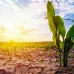 Mezőgazdasági termelőknek szóló tájékoztatás aszálykár esetére