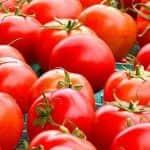 Csökken az Európai Unióban termelt frisspiaci paradicsom mennyisége – növekszik az import