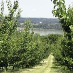 Gyümölcstermesztés: válogatva, igényes vevőknek
