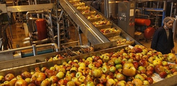 Közeleg az almafelvásárlásokhoz kapcsolódó szerződéskötési határidő
