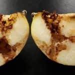 Terjed az USA-ban az almalégy
