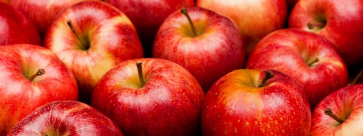Valószínűleg nem jelentősek a lengyel almásokat sújtó fagykárok: 4 millió tonna körüli termés várható