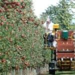 A tavaszi fagyok miatt valóban kisebb a lengyel almatermés