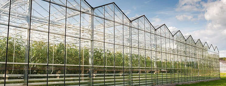30 milliárd forint kertészeti korszerűsítésre – október 19-től adhatók be a pályázatok