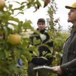 Fekete év lesz az idei a gyümölcstermesztésben