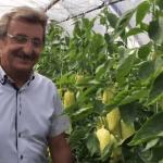 A szentesi László Ignác paprikatermesztőnél járt az Agrárágazat stábja