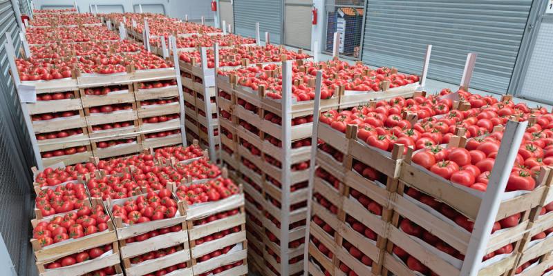 A paradicsom exportált mennyiségével Marokkó megelőzte Almeríát – most először a történelemben