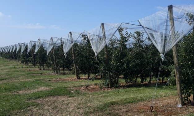 Ültetvénytelepítési és -korszerűsítési szándék felmérése