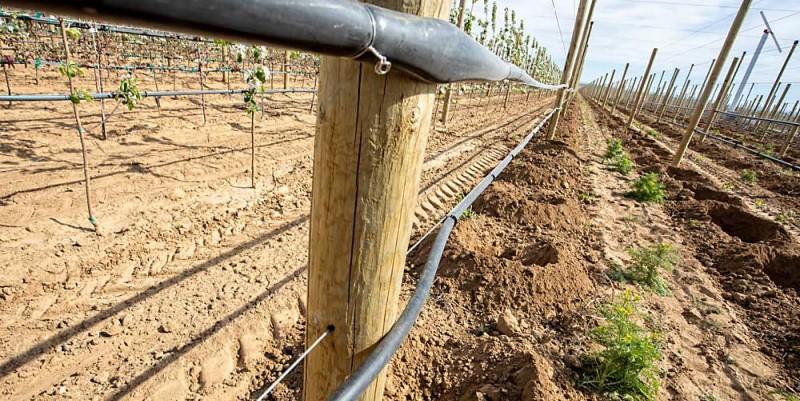 Jövőre ültetvénytelepítési pályázatot tervez az Agrárminisztérium