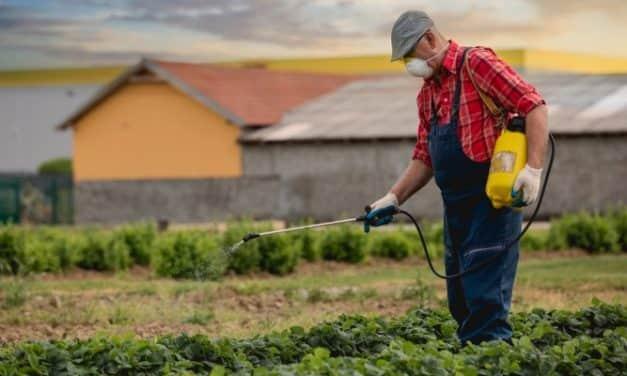 Újabb előrelépések a kiskultúrák növényvédelmében