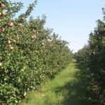 Ültetvénytelepítési és -korszerűsítési szándék felmérésének eredményei