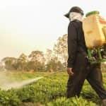 Újabb szükséghelyzeti engedélyek segítik a kertészeti kultúrák növényvédelmét