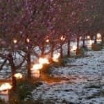 Mezőgazdasági biztosítások és a kárenyhítési rendszer a szélsőséges időjárás jelentette kockázatok tükrében