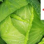 Rezisztenciatörő megoldás a káposzta és burgonya védelmére (X)