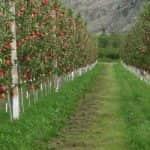 Tájékoztatás a Gyümölcs Termőhelyi Kataszterről az ültetvénytelepítési támogatásra pályázók részére