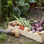 A 2020. évi magyarországi zöldségtermesztés értékelése