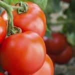A FruitVeB sajtóközleménye