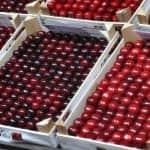 Cseresznyepiaci árjelentés és európai kitekintés – 2021. június 11.