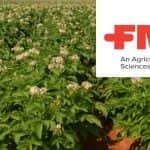 Előtérben a burgonya védelme: új készítmény a burgonya betegségei ellen! (X)