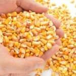Tájékoztató csávázott csemegekukorica, zöldborsó és zöldbab vetőmagok további felhasználásáról
