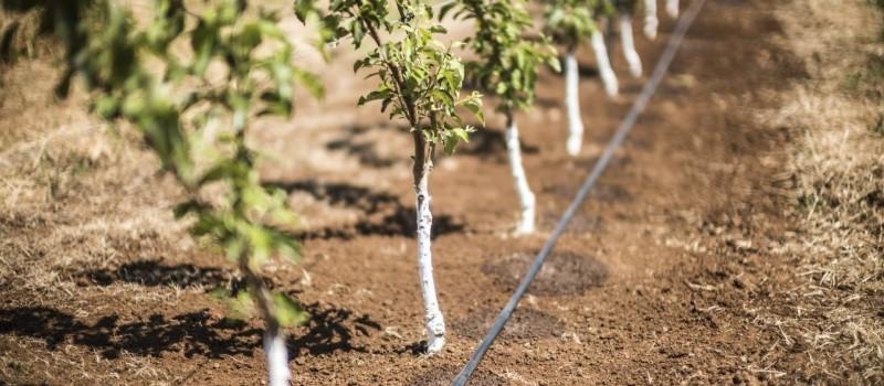 Öntözés a zöldség- és gyümölcságazat tükrében